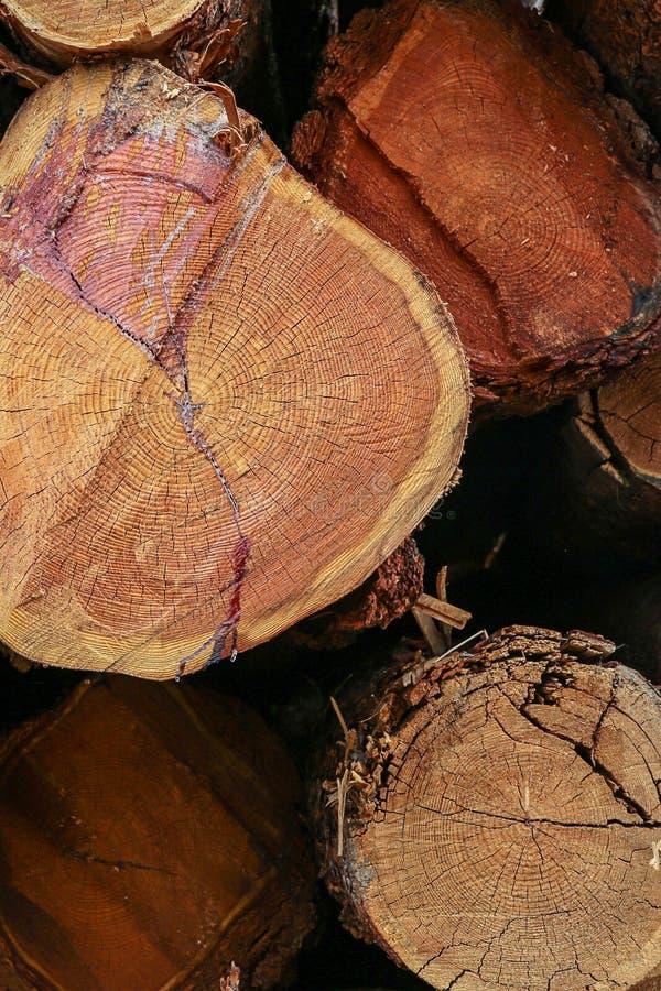 Pila de árboles al manojo de troncos un extremo cortado liso de un fondo de madera del primer de la textura fotografía de archivo libre de regalías