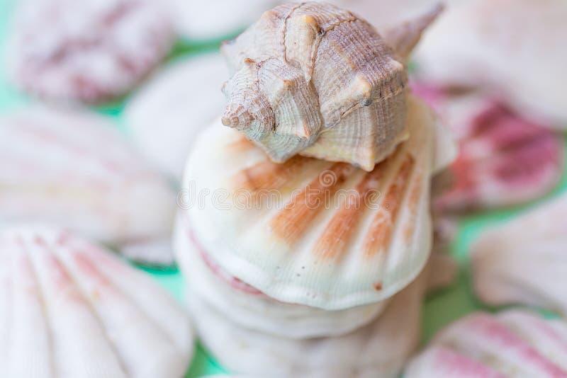 Pila de cáscaras marrones rosadas blancas planas y espirales del mar en fondo verde claro de la turquesa Tropical, vacaciones, sa foto de archivo libre de regalías
