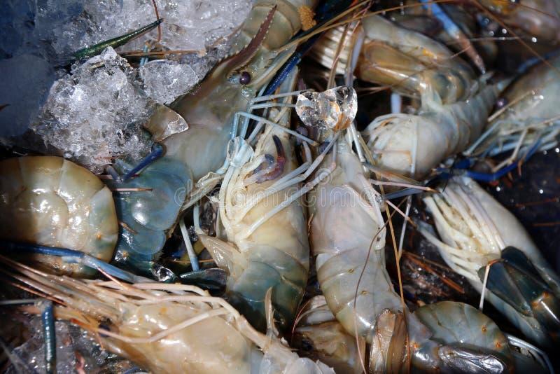 Pila de camarón en hielo El camarón es animales acuáticos Respiración con las gomas imagen de archivo libre de regalías
