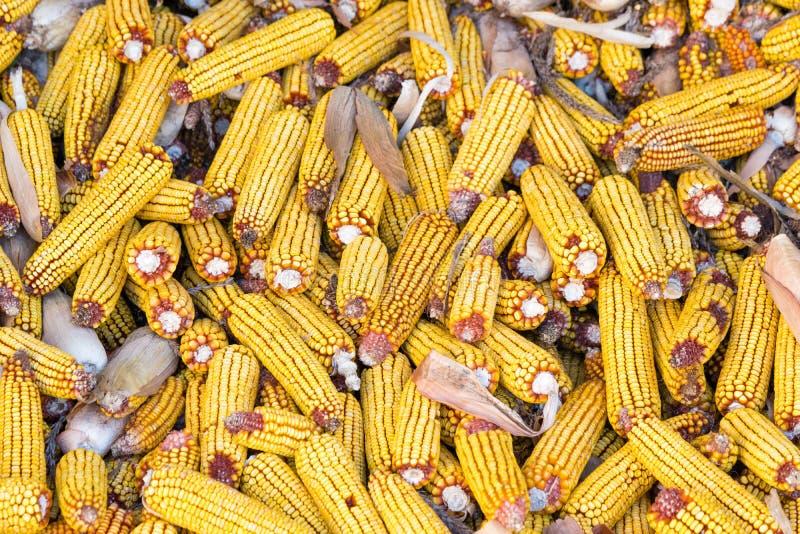 Pila de espiga de trigo madura después del Zea mayos de la cosecha Concepto agrícola Fondo foto de archivo