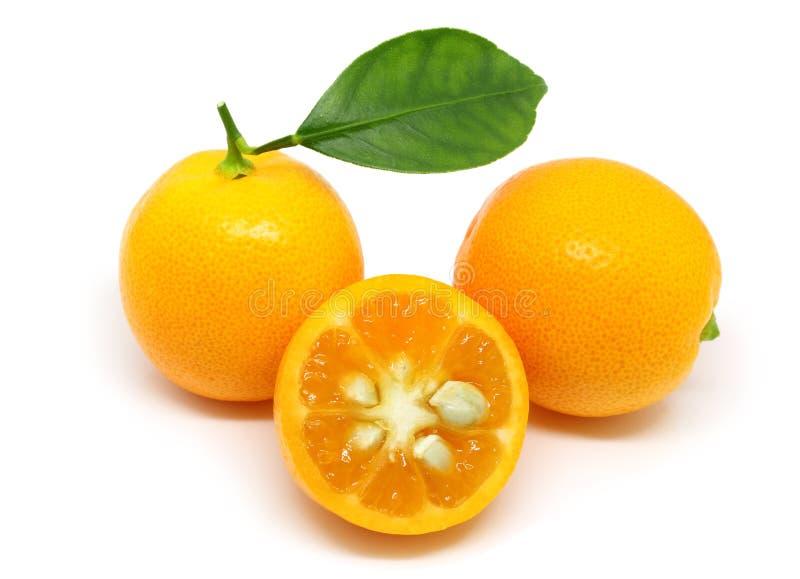 Pila de kumquats aislados en blanco imágenes de archivo libres de regalías
