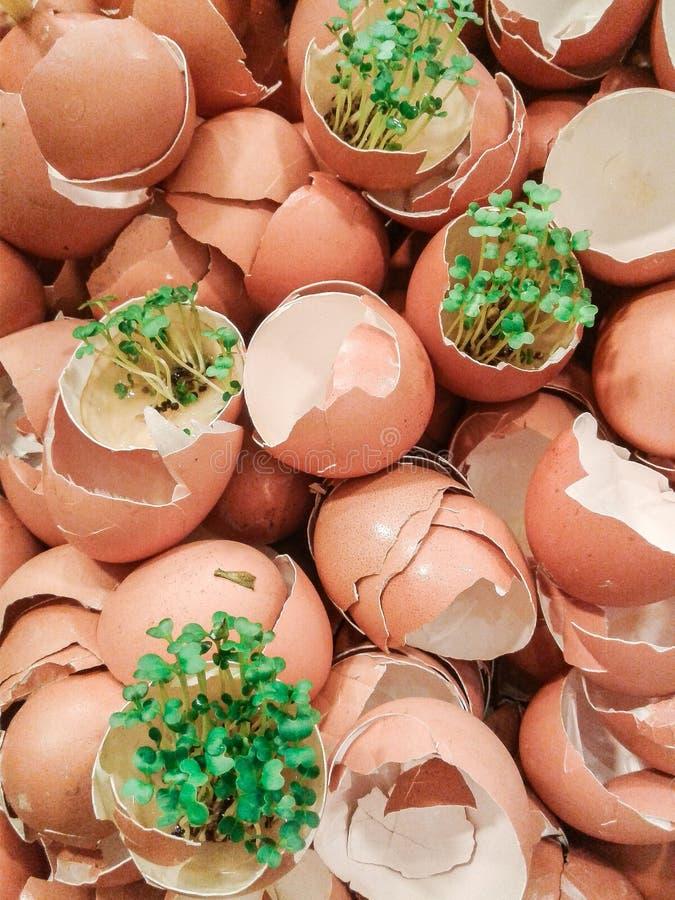 Pila de la cáscara de huevo junto mucho imagen de archivo