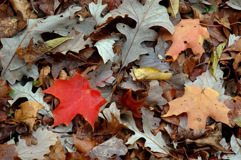 Pila de la hoja del otoño foto de archivo