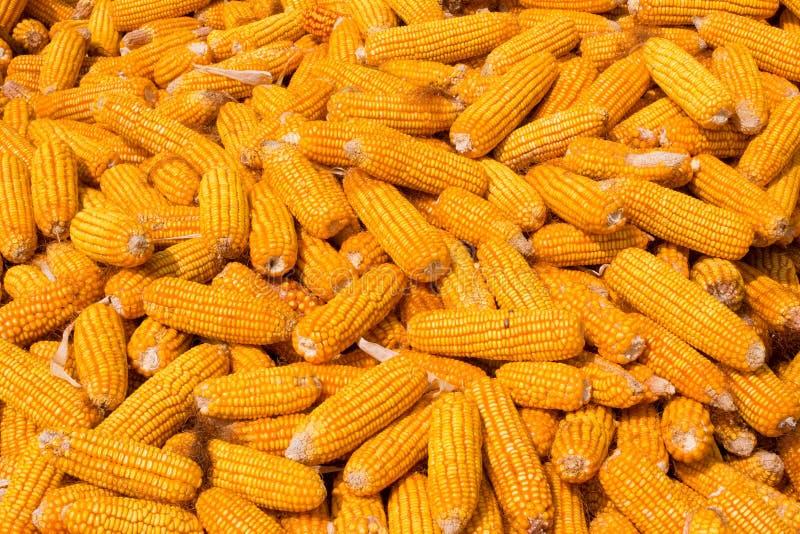 Pila de la mazorca de maíz foto de archivo