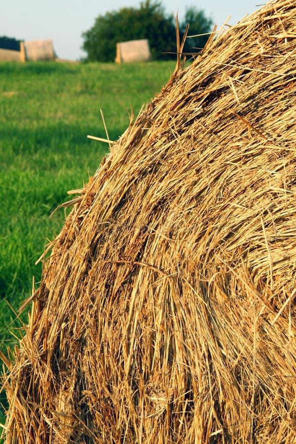Pila de la paja con la hierba verde y otras balas en fondo foto de archivo libre de regalías