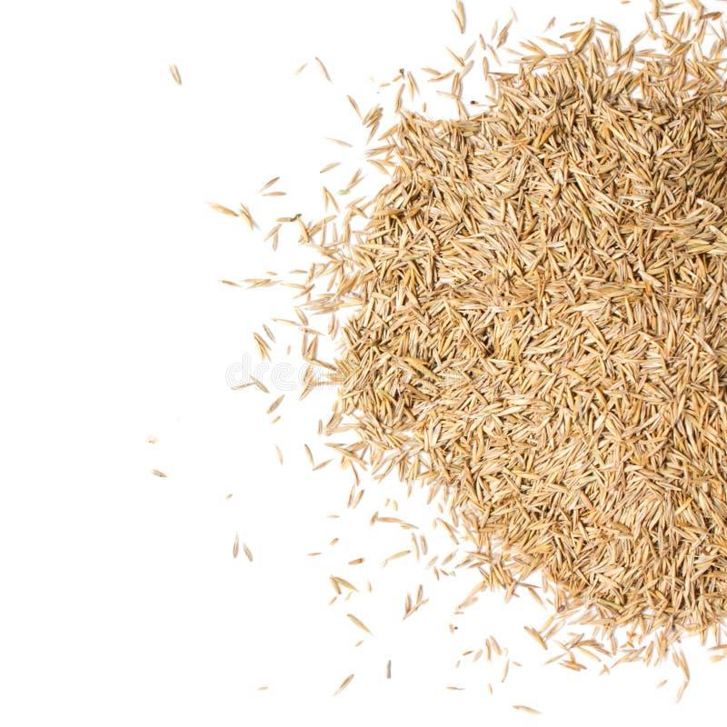 Pila de la semilla de la hierba fotografía de archivo