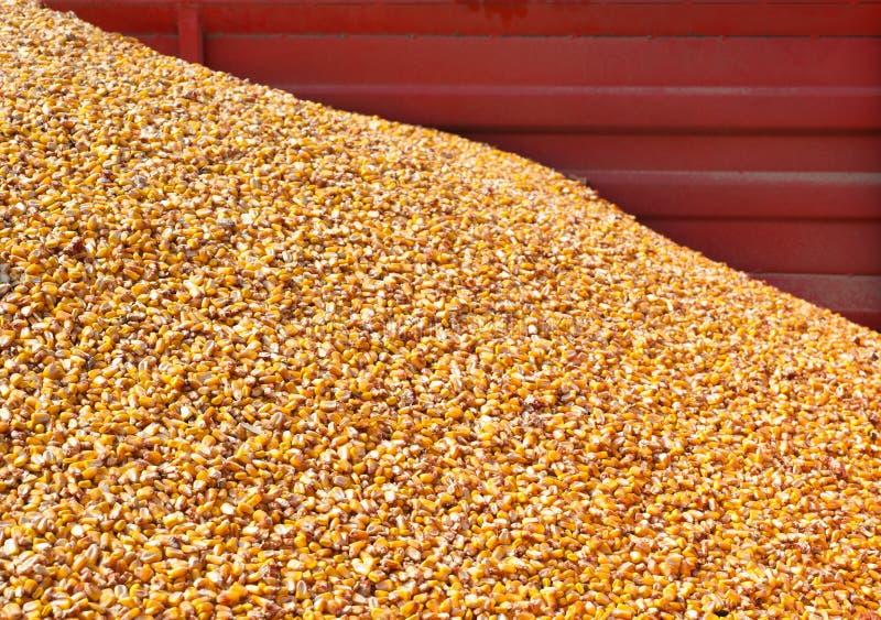 Pila de maíz fotos de archivo