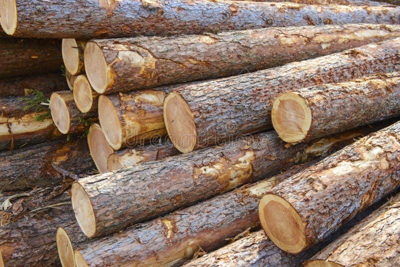 Pila de madera cruda imagen de archivo libre de regalías