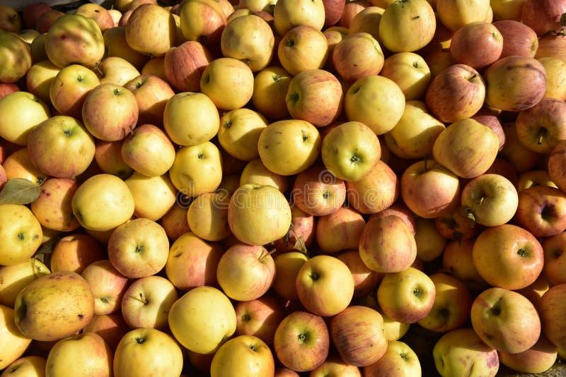 Pila de manzanas deliciosas fotos de archivo