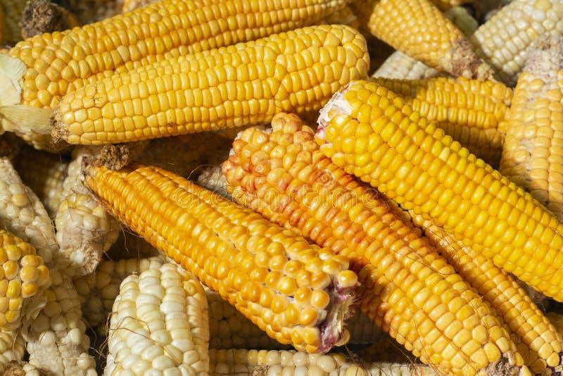 pila de mazorcas de maíz en el mercado fotografía de archivo libre de regalías