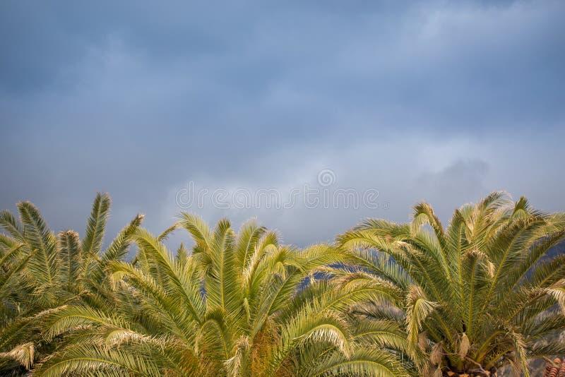Pila de palmeras hermosas en el cielo azul como fondo imagen de archivo