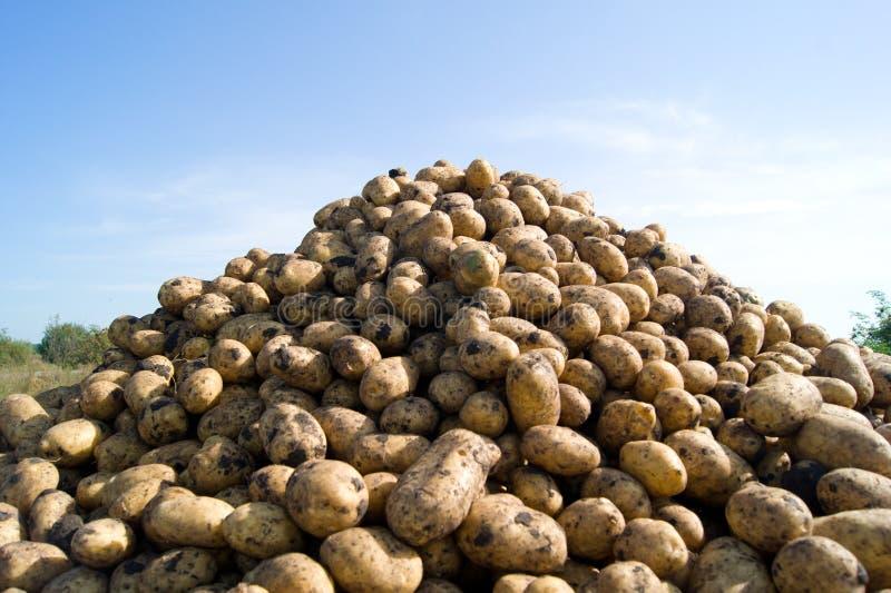 Pila de patatas fotos de archivo