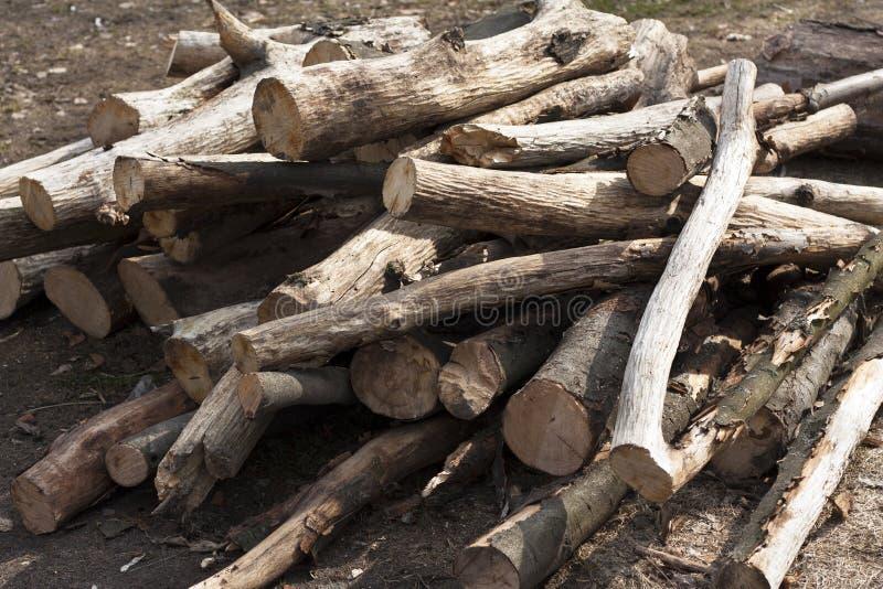 Pila de rama de árbol, palillo de madera imagenes de archivo