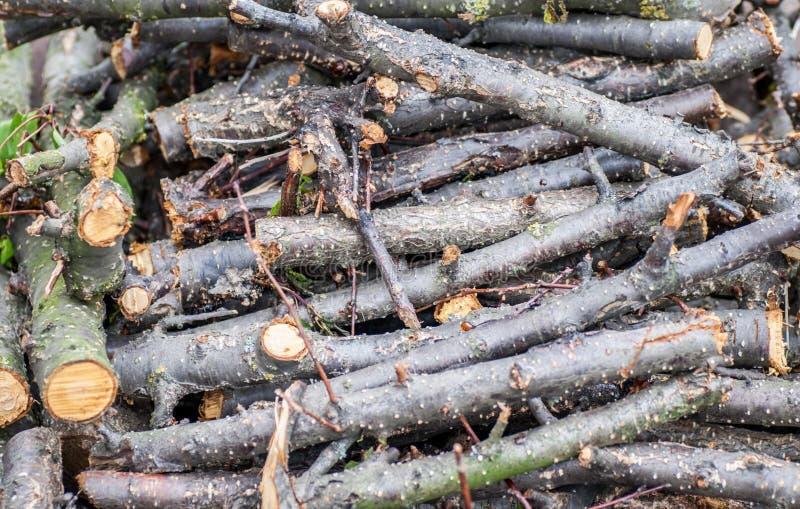 Pila de ramas derribadas de la cereza foto de archivo libre de regalías