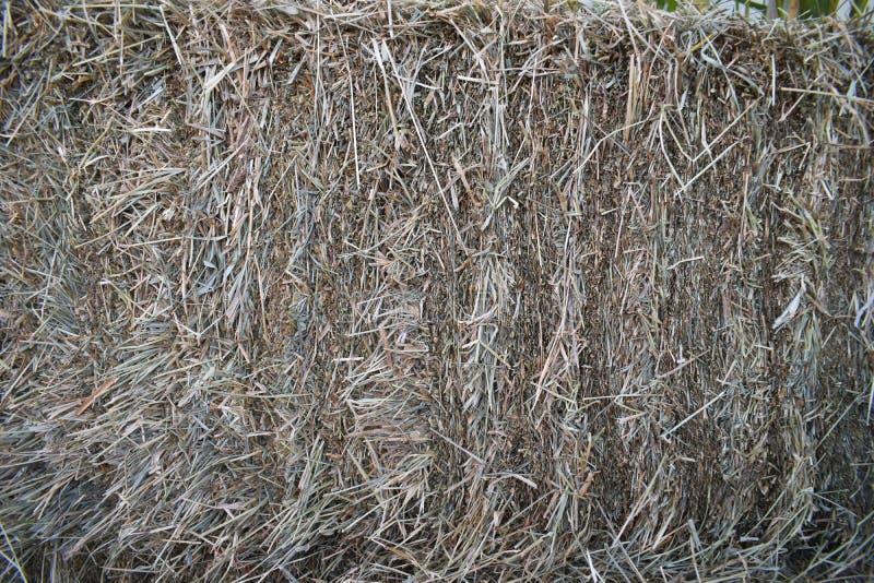 Pila de textura de la paja Pila de hierba seca del heno Acción de la alimentación para el ganado imágenes de archivo libres de regalías