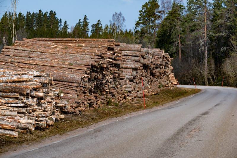 Pila de troncos de la madera para pasta papelera cerca de un camino fotos de archivo libres de regalías