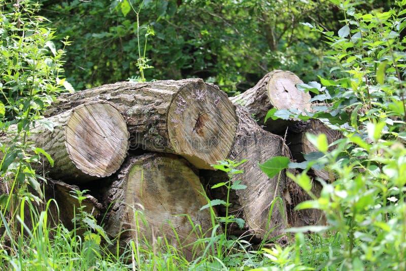 Pila dei tronchi di albero sopra a vicenda immagine stock