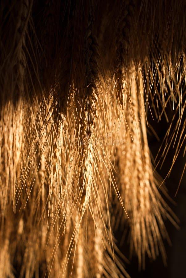 Pila del grano che si asciuga al sole fotografia stock libera da diritti