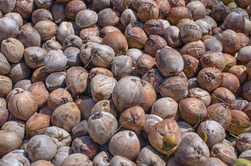 Pila della noce di cocco per industria petrolifera di olio di cocco immagini stock libere da diritti