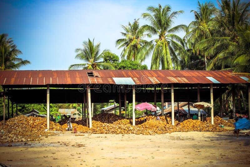 Pila delle noci di cocco in azienda agricola per olio di cocco fotografia stock libera da diritti