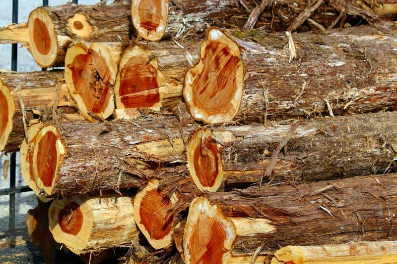 Pila di Cedar Logs fotografia stock