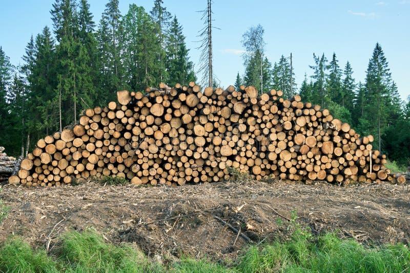 Pila di ceppi di legno che si trovano sulla terra davanti alla foresta fotografia stock