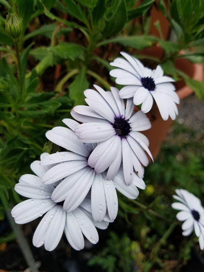 Pila di fiori fotografia stock