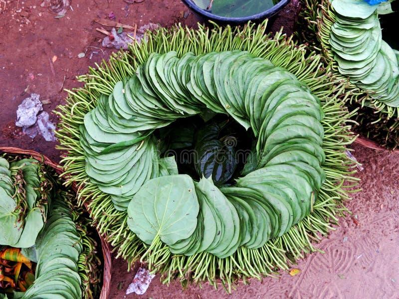 Pila di foglie del betel, stimolante fotografia stock libera da diritti
