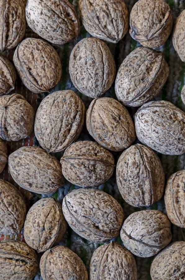 Pila di frutti maturi delle noci del tutto dal campo pronto da mangiare fotografie stock libere da diritti