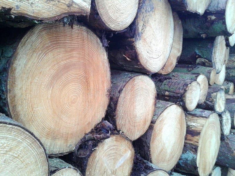 Pila di legname, fondo immagini stock