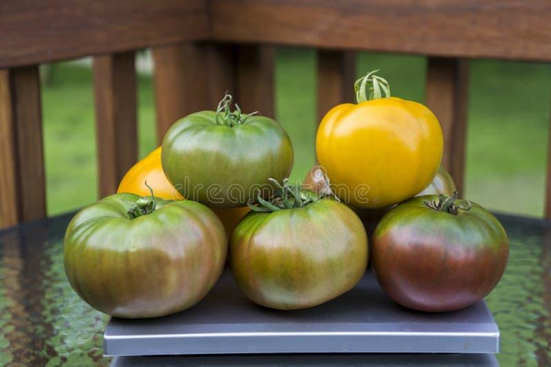 Pila di pomodori organici di cimelio immagini stock