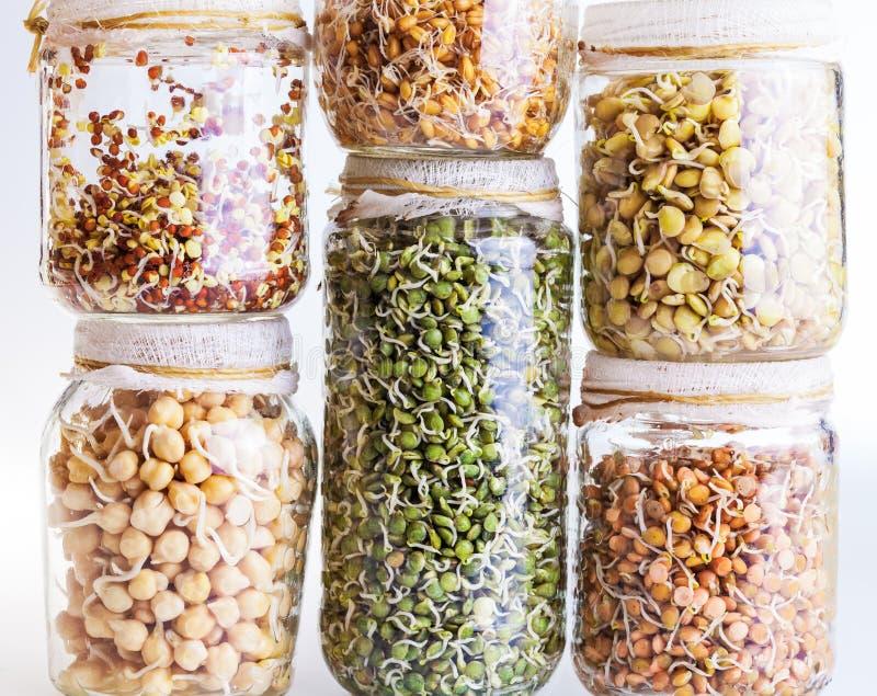 Pila di semi differenti germogliare che crescono in un barattolo di vetro fotografia stock