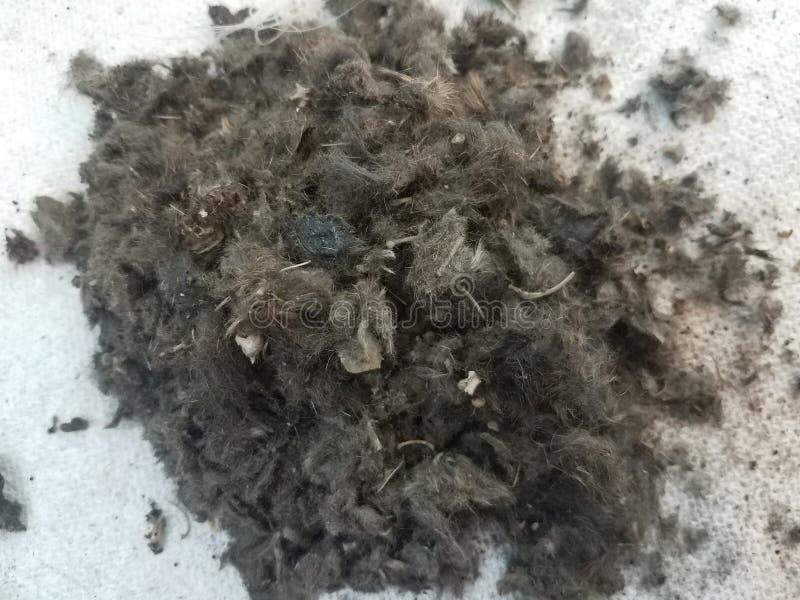 Pila grande de pelo negro de la pelotilla del búho foto de archivo libre de regalías