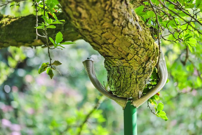 Pilar de la ayuda de la rama de árbol foto de archivo