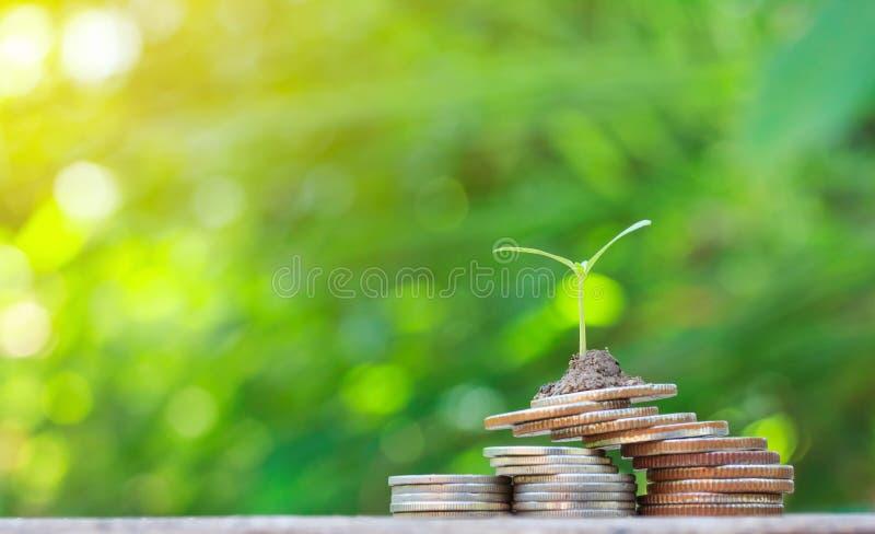 Pilas de las monedas en la tabla con el árbol que crece en el top foto de archivo libre de regalías