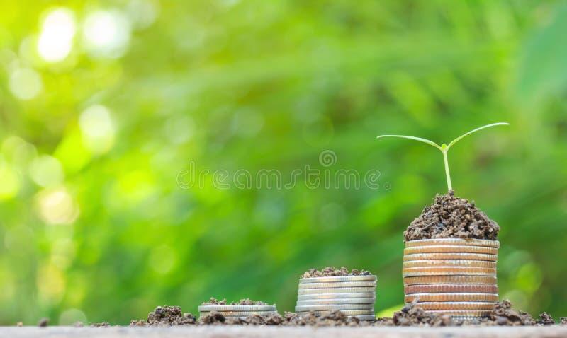 Pilas de las monedas en la tabla con el árbol que crece en el top fotografía de archivo