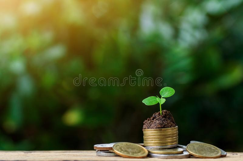 Pilas de las monedas en la tabla con el árbol que crece en el top imágenes de archivo libres de regalías