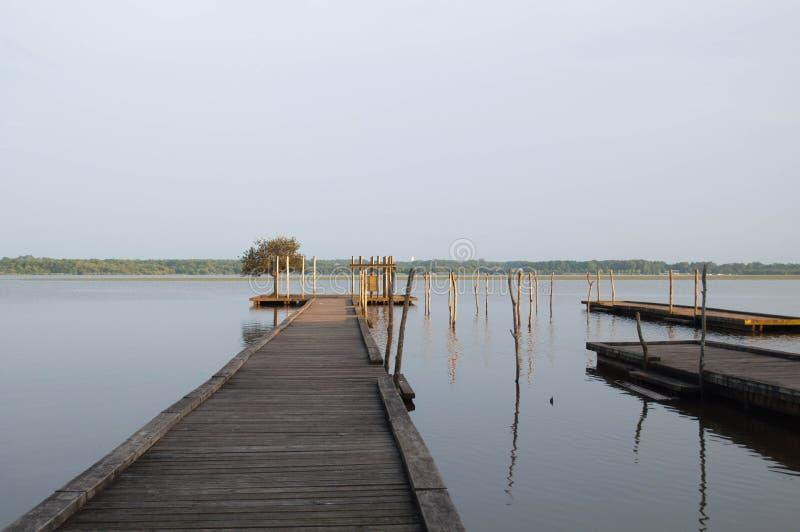 Pilastro ed albero di legno nel lago Soustons, Landes immagine stock