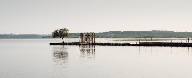 Pilastro ed albero di legno nel lago Soustons, Landes, Francia immagini stock libere da diritti