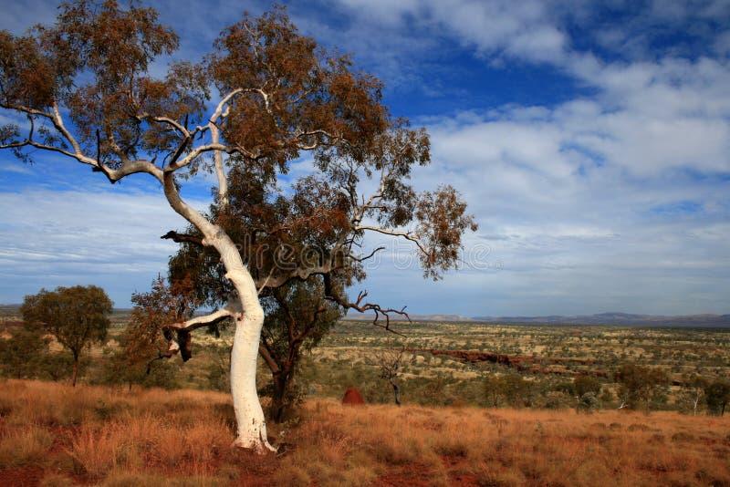 pilbara парка karijini Австралии стоковые изображения rf