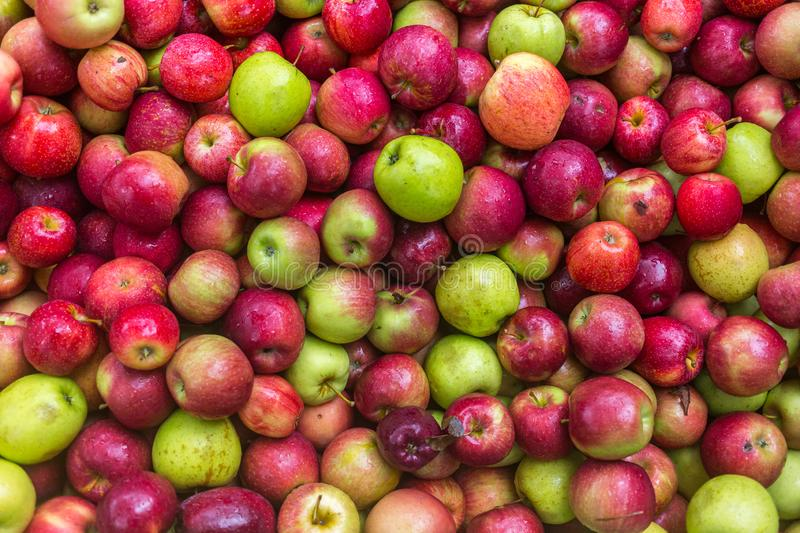 Pile of apples for cider stock photos