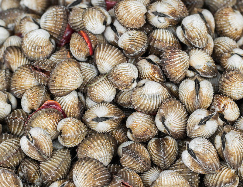 A pile of ark shell. Close up a pile of ark shell background royalty free stock photography