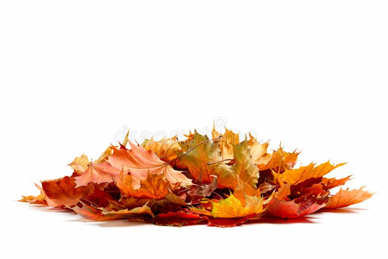 Pile of autumn colored leaves isolated on white background.A heap of different maple dry leaf .Red and colorful foliage colors in stock photography