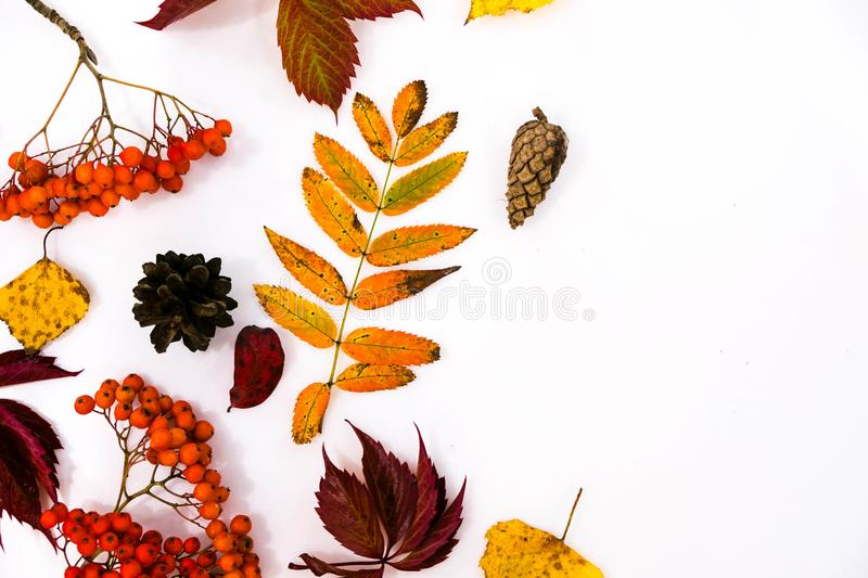 Pile of autumn leaves, pine cones nuts over white background. collection beautiful colorful leaves border from autumn royalty free stock photography
