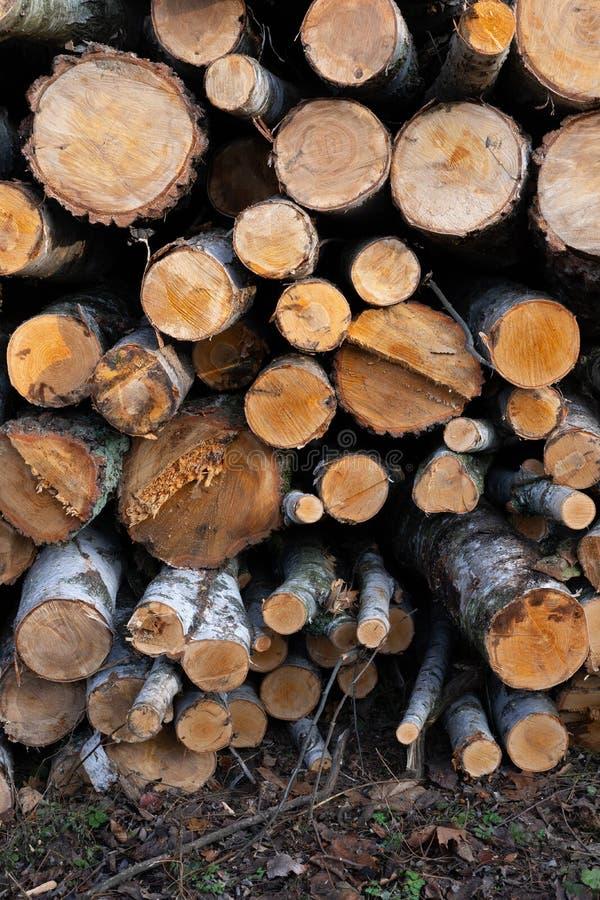 Pile of Birch Trees Logs lizenzfreies stockbild