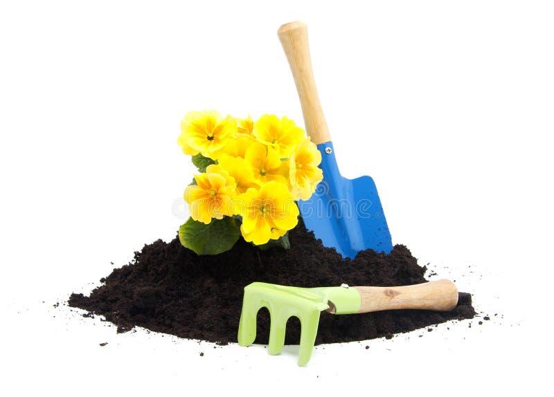Pile of black garden soil with primula flower and tools for Black garden soil
