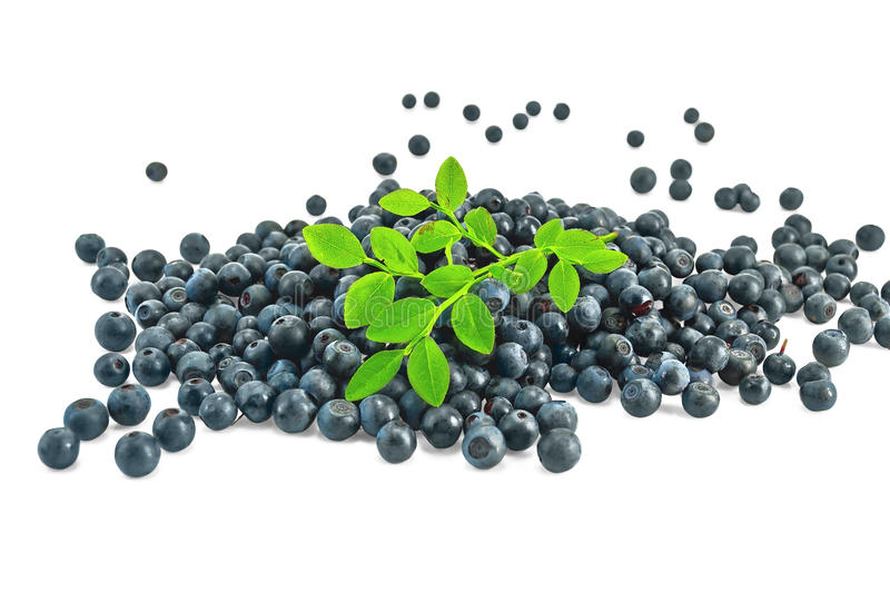Download Pile Blueberries With A Sprig Of Stock Photo - Image: 20390818