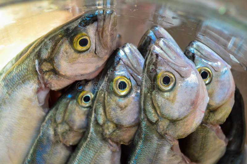 Pile of bluefish in a glass bowl before cooking stock photos
