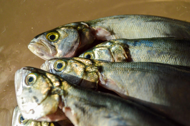 Pile of bluefish in a glass bowl before cooking stock images