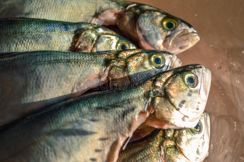 Pile of bluefish in a glass bowl before cooking stock photography